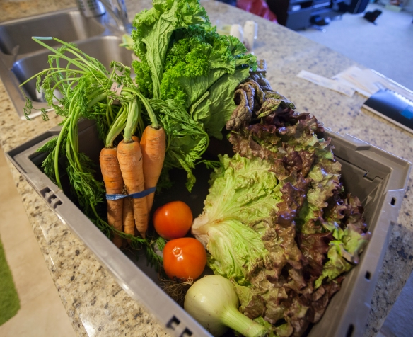 Veggie box full